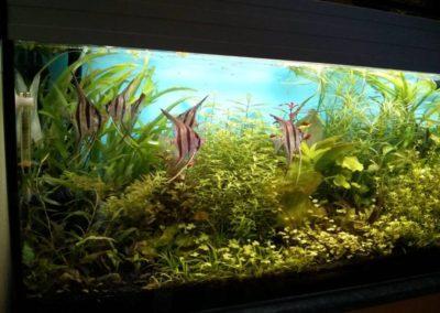 Sieć sklepów ZooLogicznych ZooNemo Legionowo Nowy Dwór Mazowiecki ryby, rośliny, psy, koty (69)