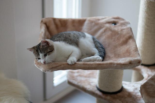 Wypsażenie, zabawki psy kotu Legionowo Nowy Dwór Mazowiecki ZooNemo (2)
