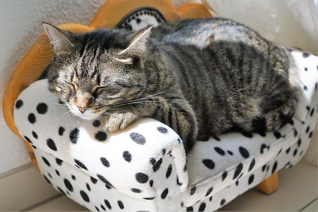 Wypsażenie, zabawki psy kotu Legionowo Nowy Dwór Mazowiecki ZooNemo (25)