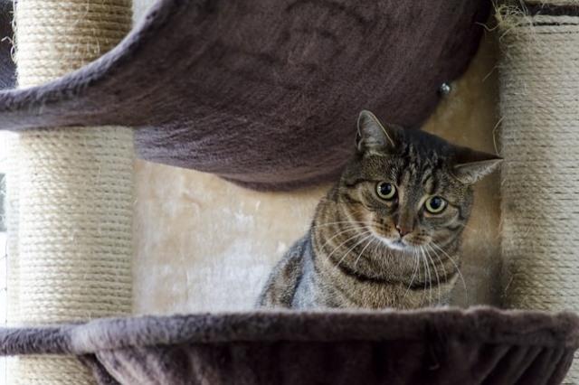 Wypsażenie, zabawki psy kotu Legionowo Nowy Dwór Mazowiecki ZooNemo (31)