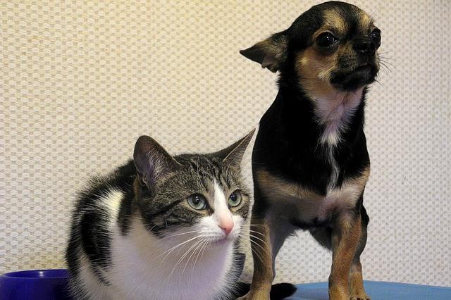 Wypsażenie, zabawki psy kotu Legionowo Nowy Dwór Mazowiecki ZooNemo (34)