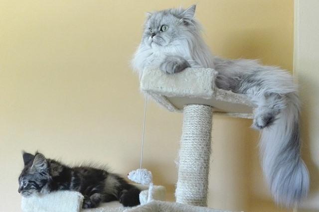 Wypsażenie, zabawki psy kotu Legionowo Nowy Dwór Mazowiecki ZooNemo (4)