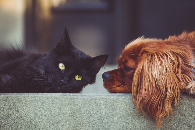 Wypsażenie, zabawki psy kotu Legionowo Nowy Dwór Mazowiecki ZooNemo (50)