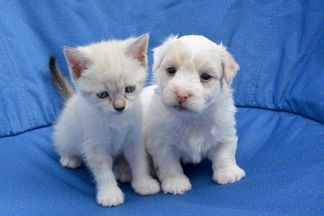 Wypsażenie, zabawki psy koty Legionowo Nowy Dwór Mazowiecki ZooNemo