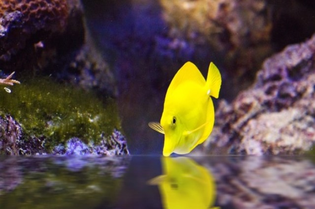 ZooNemo Akwarystyka Akwaria Ryby (1)