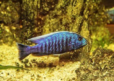 ZooNemo Akwarystyka Akwaria Ryby (10)