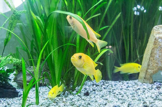 ZooNemo Akwarystyka Akwaria Ryby (11)