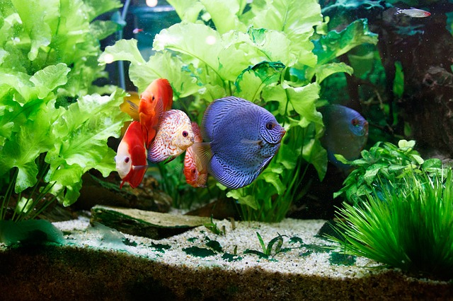 ZooNemo Akwarystyka Akwaria Ryby (13)
