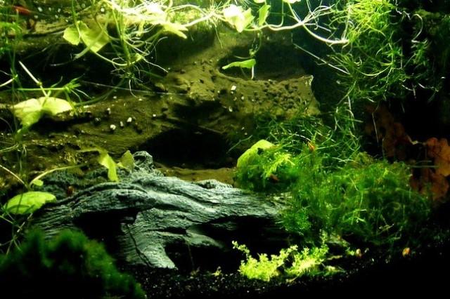 ZooNemo Akwarystyka Akwaria Ryby (15)