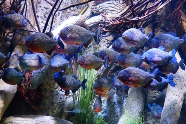 ZooNemo Akwarystyka Akwaria Ryby (16)