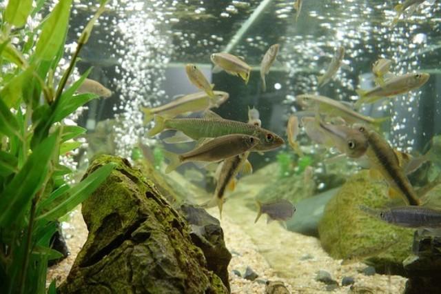 ZooNemo Akwarystyka Akwaria Ryby (19)