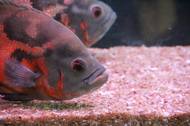 ZooNemo Akwarystyka Akwaria Ryby (20)
