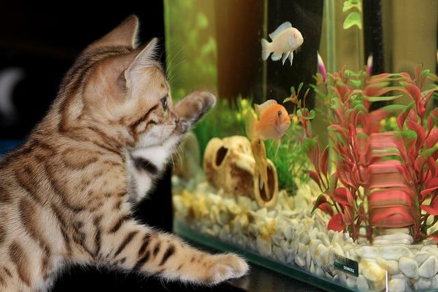 ZooNemo Akwarystyka Akwaria Ryby (21)