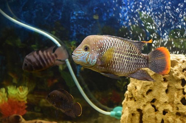 ZooNemo Akwarystyka Akwaria Ryby (22)