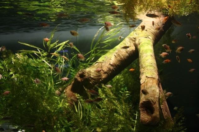 ZooNemo Akwarystyka Akwaria Ryby (24)