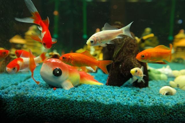 ZooNemo Akwarystyka Akwaria Ryby (26)