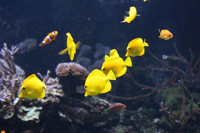 ZooNemo Akwarystyka Akwaria Ryby (27)