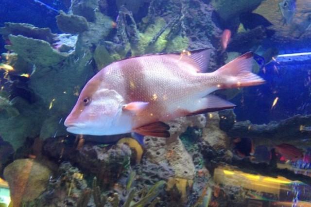 ZooNemo Akwarystyka Akwaria Ryby (29)