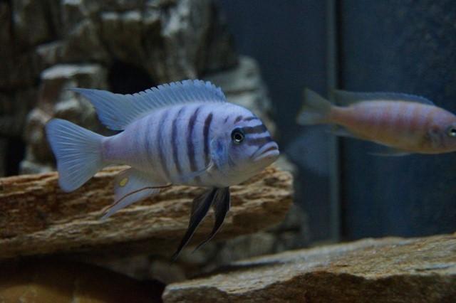 ZooNemo Akwarystyka Akwaria Ryby (3)