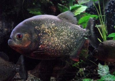 ZooNemo Akwarystyka Akwaria Ryby (30)