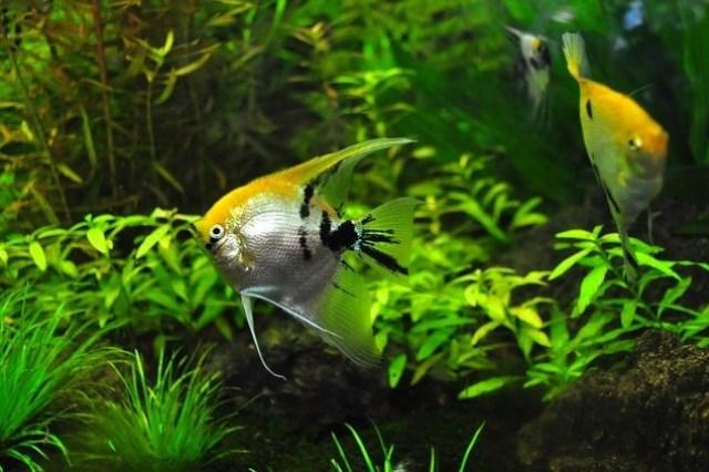 ZooNemo Akwarystyka Akwaria Ryby (31)
