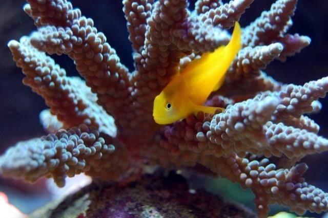 ZooNemo Akwarystyka Akwaria Ryby (32)
