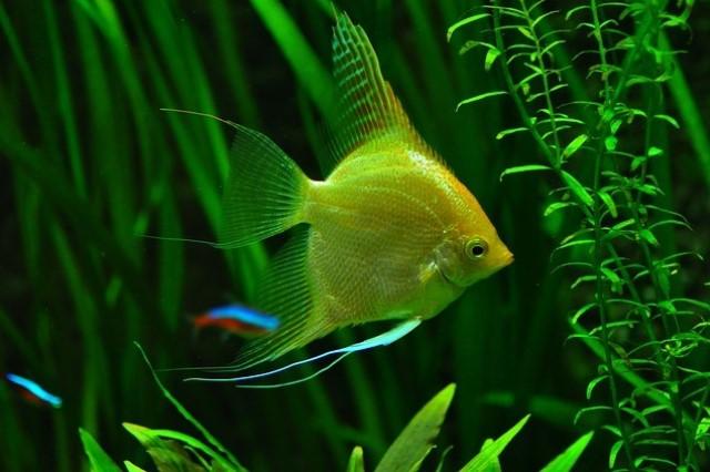 ZooNemo Akwarystyka Akwaria Ryby (34)