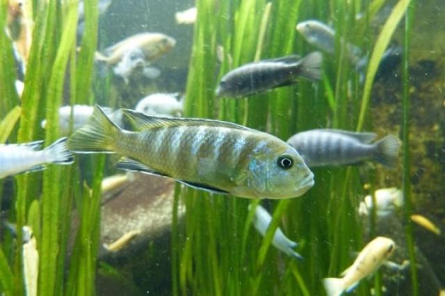 ZooNemo Akwarystyka Akwaria Ryby (37)