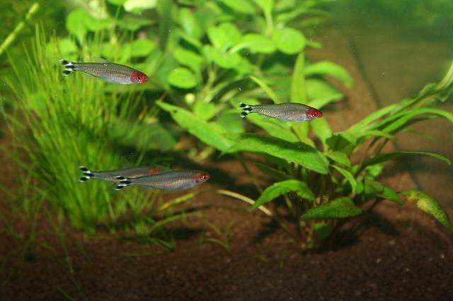 ZooNemo Akwarystyka Akwaria Ryby (38)