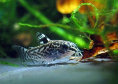 ZooNemo Akwarystyka Akwaria Ryby (4)