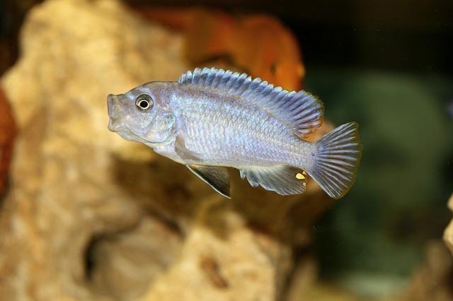 ZooNemo Akwarystyka Akwaria Ryby (6)