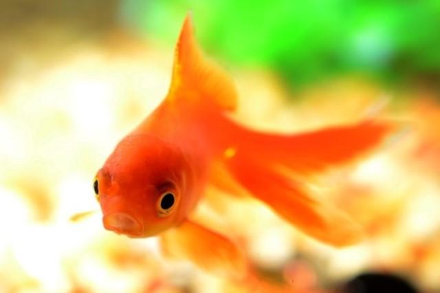 ZooNemo Akwarystyka Akwaria Ryby (7)