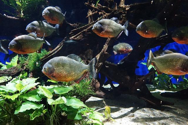 ZooNemo Akwarystyka Akwaria Ryby (9)