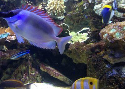 ZooNemo akwarium morskie 10