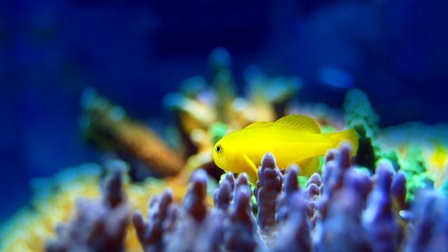 ZooNemo akwarium morskie 11