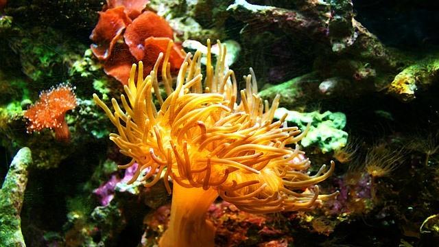 ZooNemo akwarium morskie 12