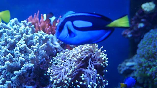 ZooNemo akwarium morskie 13