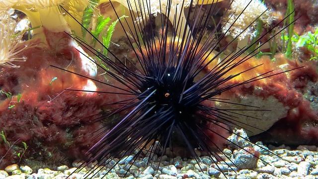 ZooNemo akwarium morskie 14
