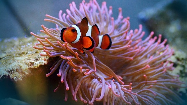 ZooNemo akwarium morskie 2
