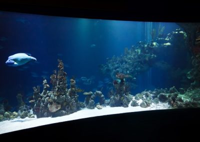 ZooNemo akwarium morskie 4