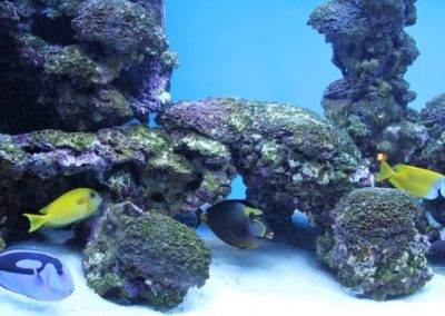 ZooNemo akwarium morskie 5