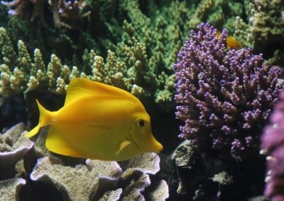 ZooNemo akwarium morskie 8