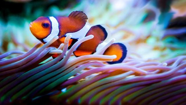 ZooNemo akwarium morskie 9