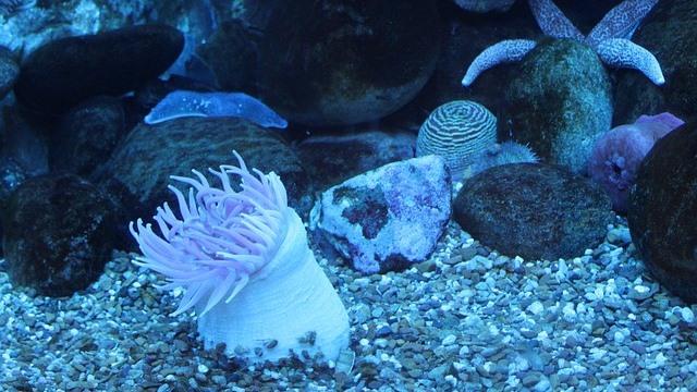 ZooNemo akwarium morskie