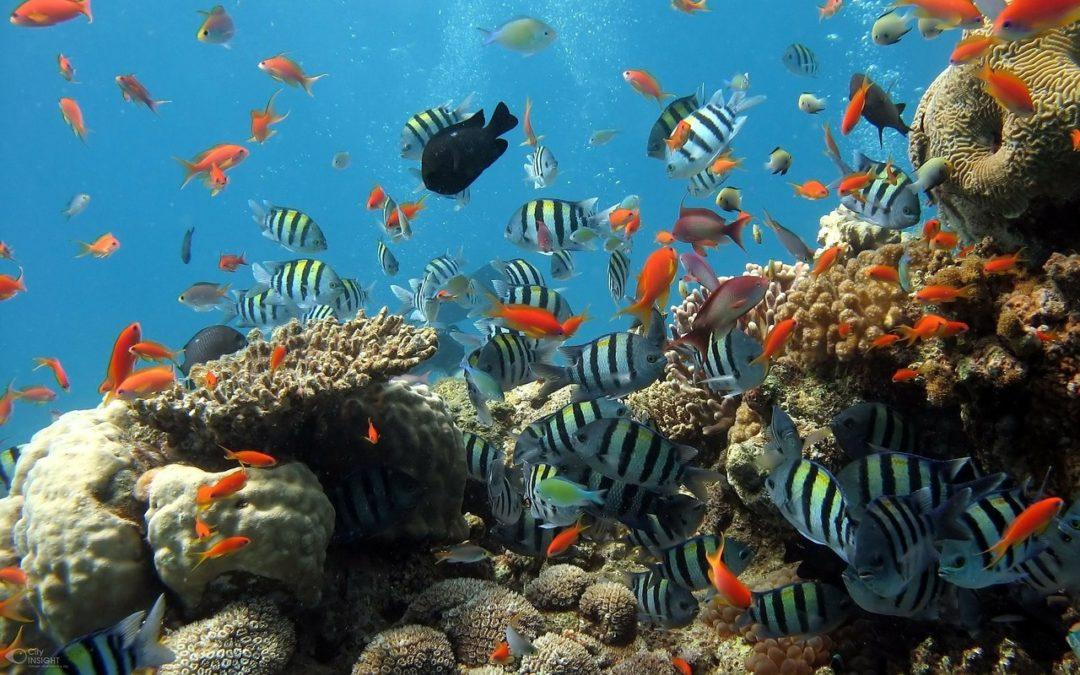 Świat podwodny