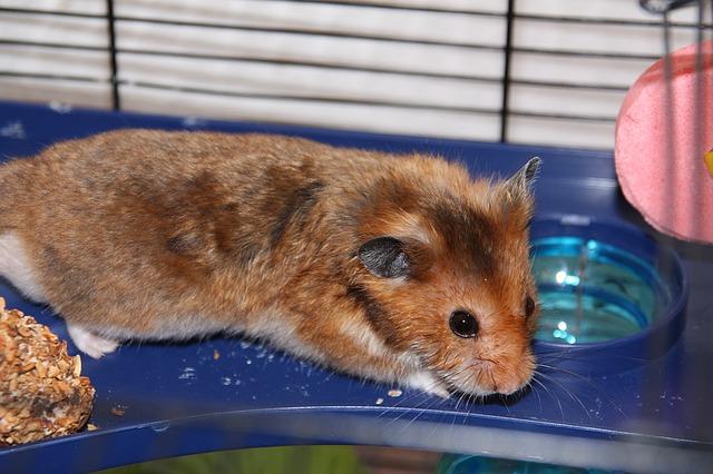 gryzonie płazy gady chomiki króliki ZooNemo (33)
