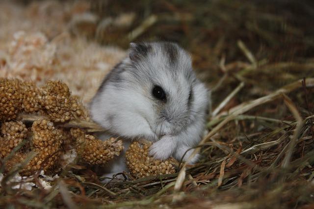 gryzonie płazy gady chomiki króliki ZooNemo (35)