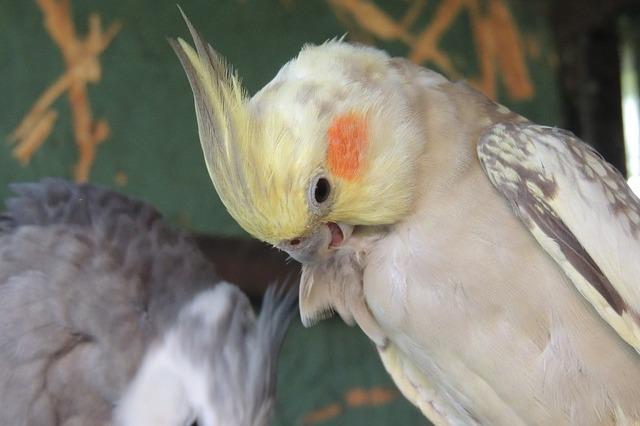 ptaki gryzonie chomiki króliczki Legionowo Nowy Dwór Mazowiecki ZooNemo (10)