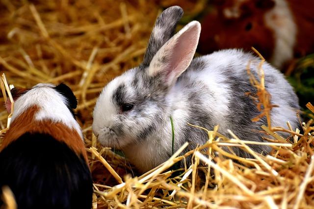 ptaki gryzonie chomiki króliczki Legionowo Nowy Dwór Mazowiecki ZooNemo (12)