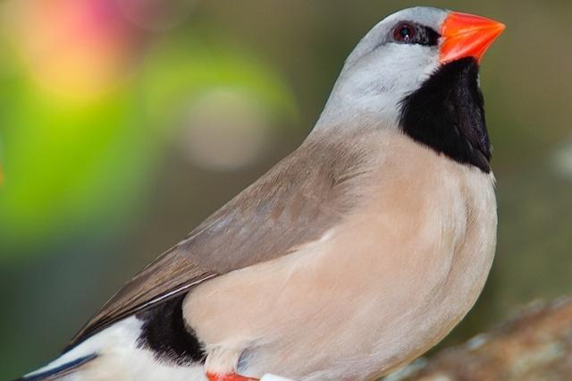 ptaki gryzonie chomiki króliczki Legionowo Nowy Dwór Mazowiecki ZooNemo (14)
